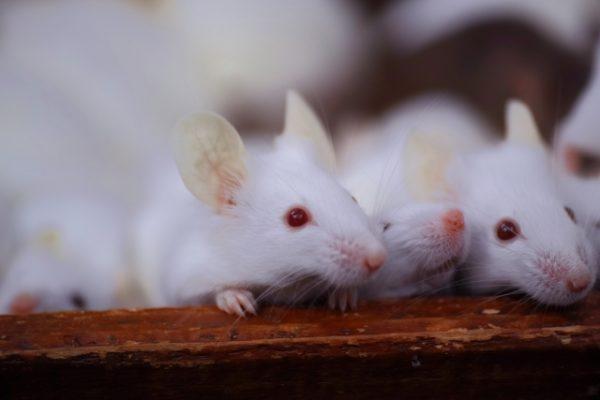 ネズミトラブルの対処法